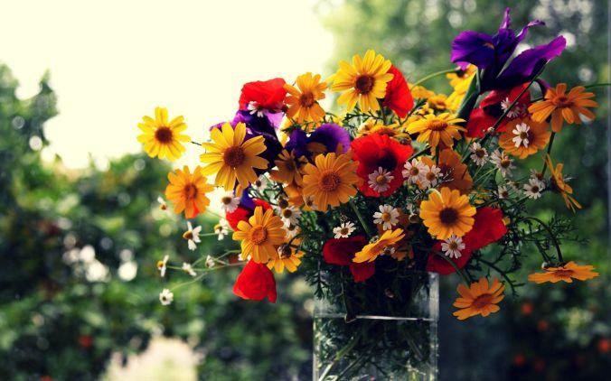field-flowers-bouquet-flower-hd-wallpaper-1920x1200-15132