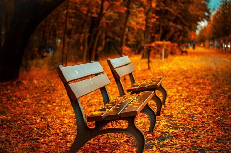 bench-560435_960_720